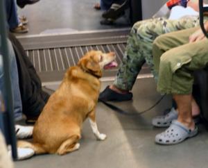 barcelona Metro U-Bahn Hund